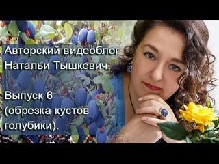 Авторский видеоблог Натальи Тышкевич. Выпуск 6 (oбрезка голубики высокорослой.).