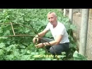 Доктор Попов - Сила земли