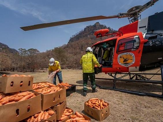 Более 2 тонн морковки с воздуха: как австралийцы помогают спасшимся из пожара животным