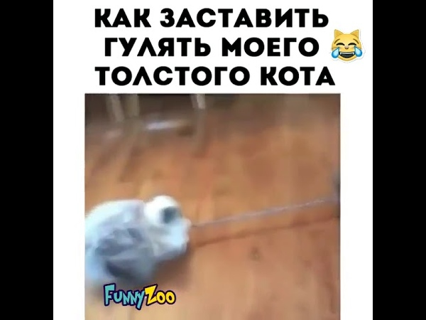 как заставить гулять моего толстого кота