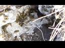 Михей Лёхов обнаружил осиное гнездо в земле на поле