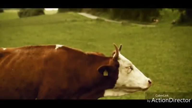 Гифка коровы