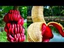 Daha Önce Hiç Görmediğiniz 10 Tuhaf Meyve