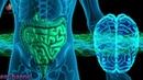 Stomach Colon Digestion Disorder Treatment ➤ Theta Binaural Beats ➤ Sound Therapy GV350