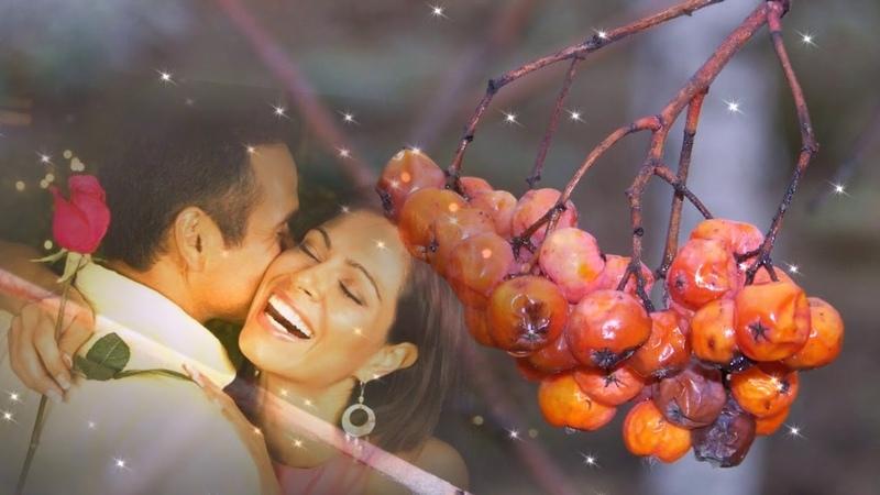 безумно трогательная песня о любви... Ион Суручану Куст рябины