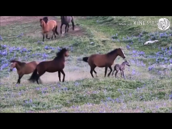 Родила лошадь и защищает своего жеребёнок