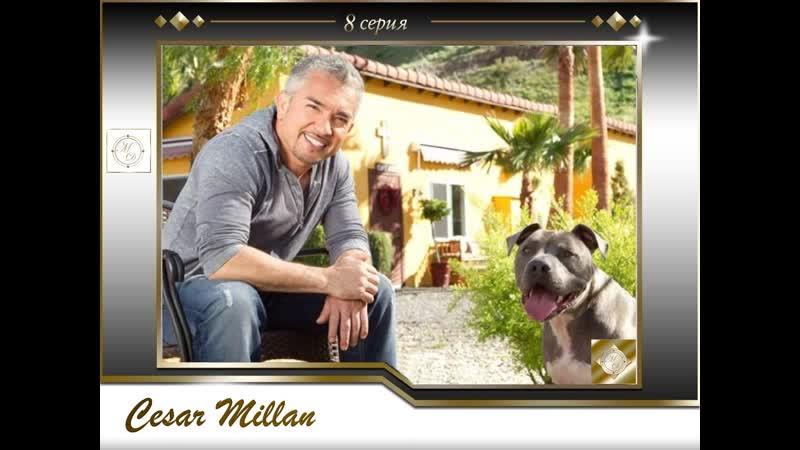 8 серия Сезар Миллан Переводчик с собачьего /Jake King