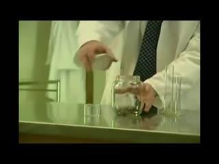 Блохи и банка. эксперимент. fleas and bank. experiment.
