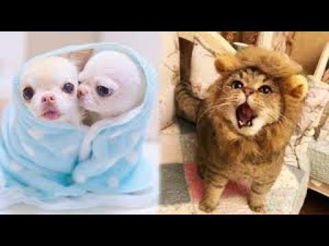 Say Đắm Trẻ sơ sinh động vật thật dễ thương - Most amazing Animals Cute For Children