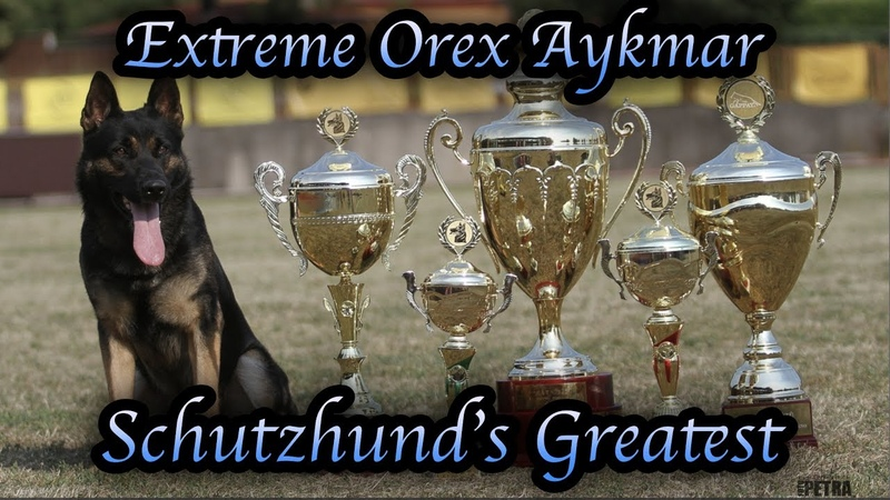 Schutzhunds Greatest Dogs *Extreme Orex Aykmar*