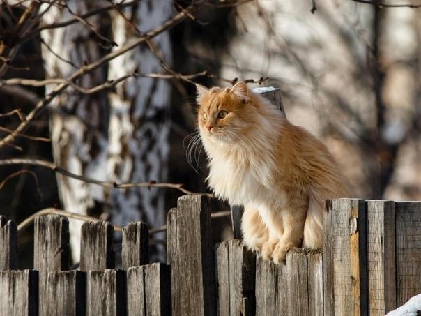 Дорогущие древнерусские котики.