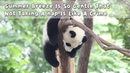 Panda Billboard Episode 99 iPanda