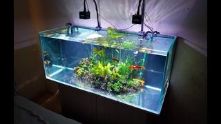 Почему не растут растения в аквариуме