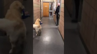 Franklin police therapy dog caught on camera stealing Christmas gifts