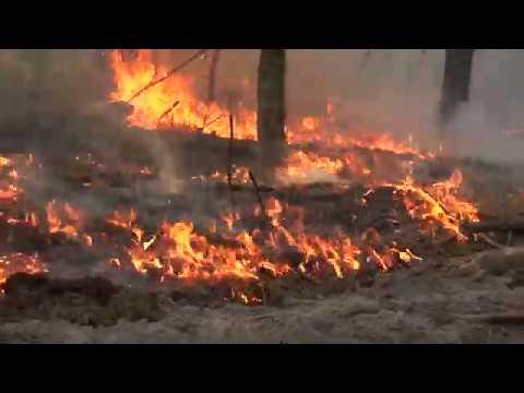 Пожар в зоне отчуждения Триває ліквідація лісової пожежі у Зоні відчуження безумовного обов'язкового відселення