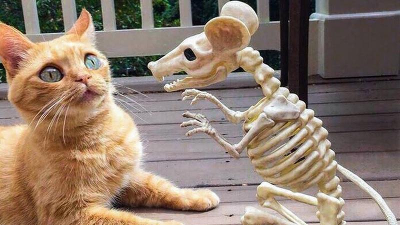 Cười vật vã những tình huống khó tin hài hước động vật Best Funniest tik tok Động vật