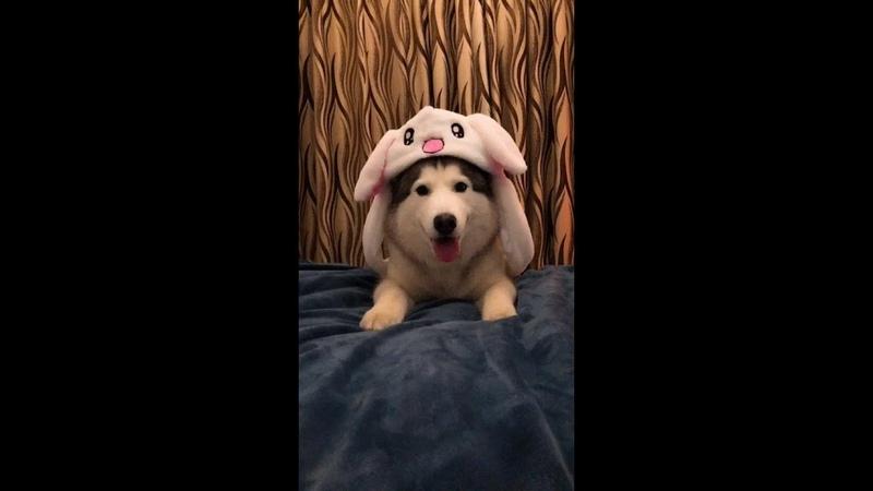 TIK TOK Bunny Ears Moving Hat Cute Rabbit Hat
