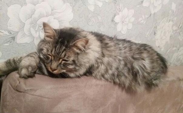 Пропал кот по кличке Сэм. Серый, пушистый без хвоста. В районе улица У