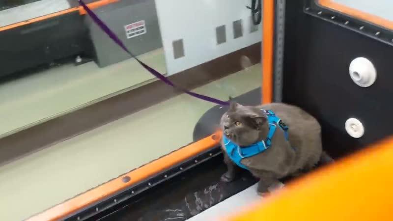 Cat Unsure of Underwater Workout ViralHog