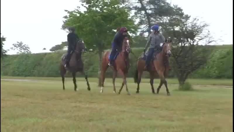 2 more days til Sharing takes on the world in the G1 Coronation @Ascot for @GrahamMotion w