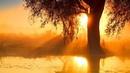 Relaxing Music 24 7 Sleep Music Meditation Calm Music Healing Zen Sleep Yoga Study Relax