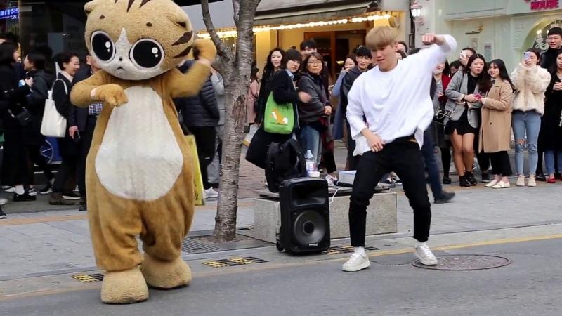 JHKTV] 신촌명물고양이댄스 shin chon special cat k pop dance dancer (박준학)bang bang bang