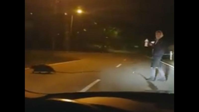 Nachts auf der Straße Wenn der Biber beim Tragen Hilfe braucht