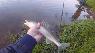 В поисках рыбы на незнакомой реке. Разловились судачком и жерехом.