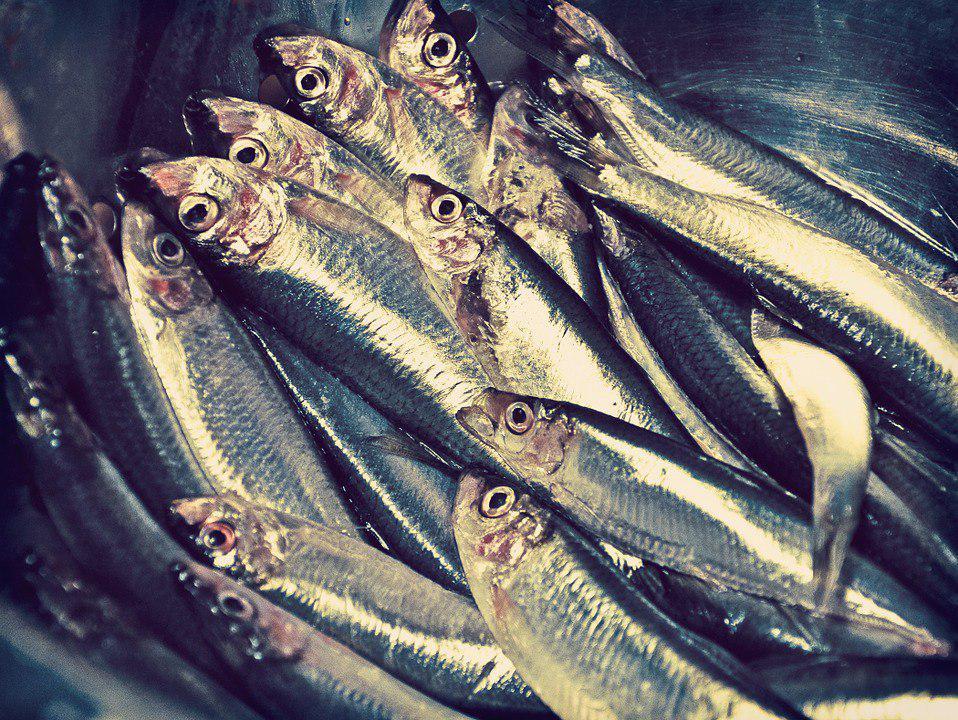 Мастер-класс по выбору свежей рыбы в магазине дадут на Академика Скрябина