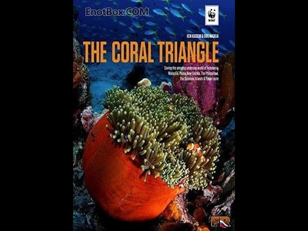 Великие тайны Кораллового треугольника часть 2
