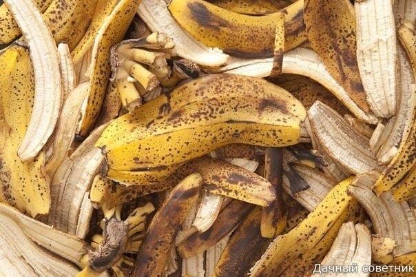 СОВЕТЫ ДАЧНИКАМ: чем пригодится чай, кофе, бананы