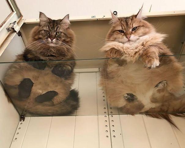 Вот почему у каждого кошатника должен быть стеклянный стол