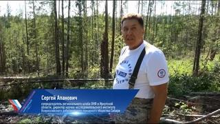 Апанович о вырубке в Тайшетском лесхозе: Такого я не видел даже после работы «черных лесорубов»
