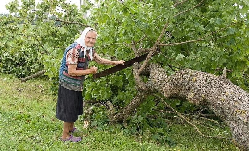 На Вагонке вырубят более 250 деревьев из-за ремонта теплосетей