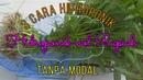 Hidroponik Sederhana, Gratis Tanpa modal