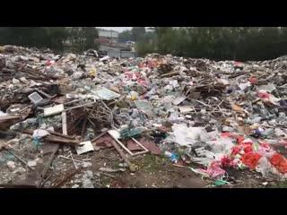 """Мусорная реформа. Анонс программы """"Неделя в Петербурге""""."""