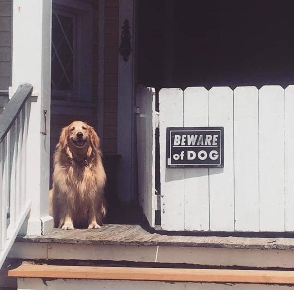 Осторожно - злая собака!