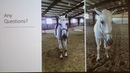 Шумы сердца у лошади Equine Heart Murmurs