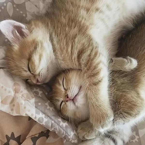 Спим сладко картинки