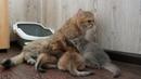 Один день мамы кошки с котятами! Релаксируем!