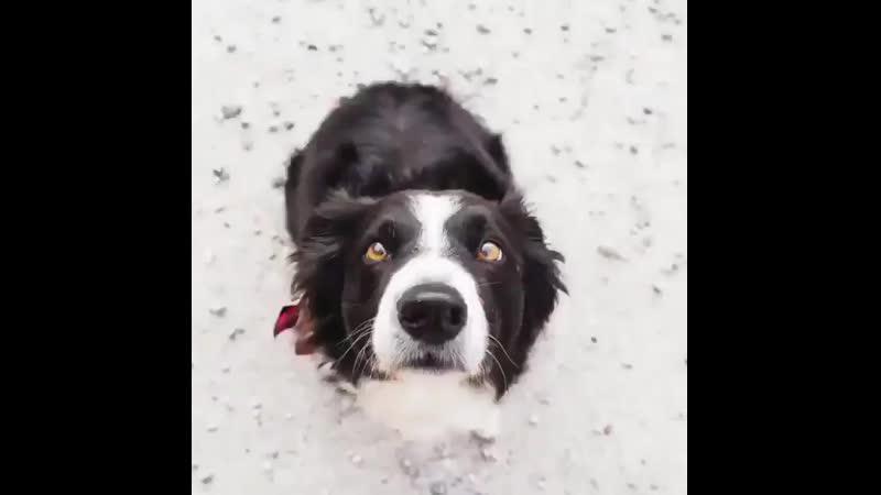 Один год в жизни собаки