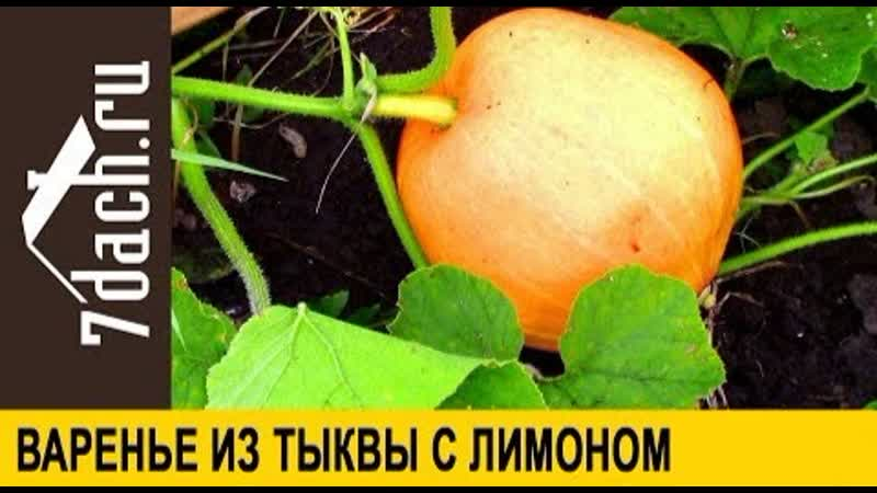 Заготовка из тыквы варенье с лимоном 7 дач