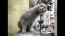 Смешные Видео Приколы с Котами. Смешные Коты до Слез. Смешные Животные 2019.32