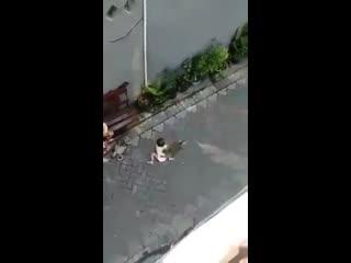 Ничего необычного, просто обезьяна на велосипеде попыталась похитить ребенка