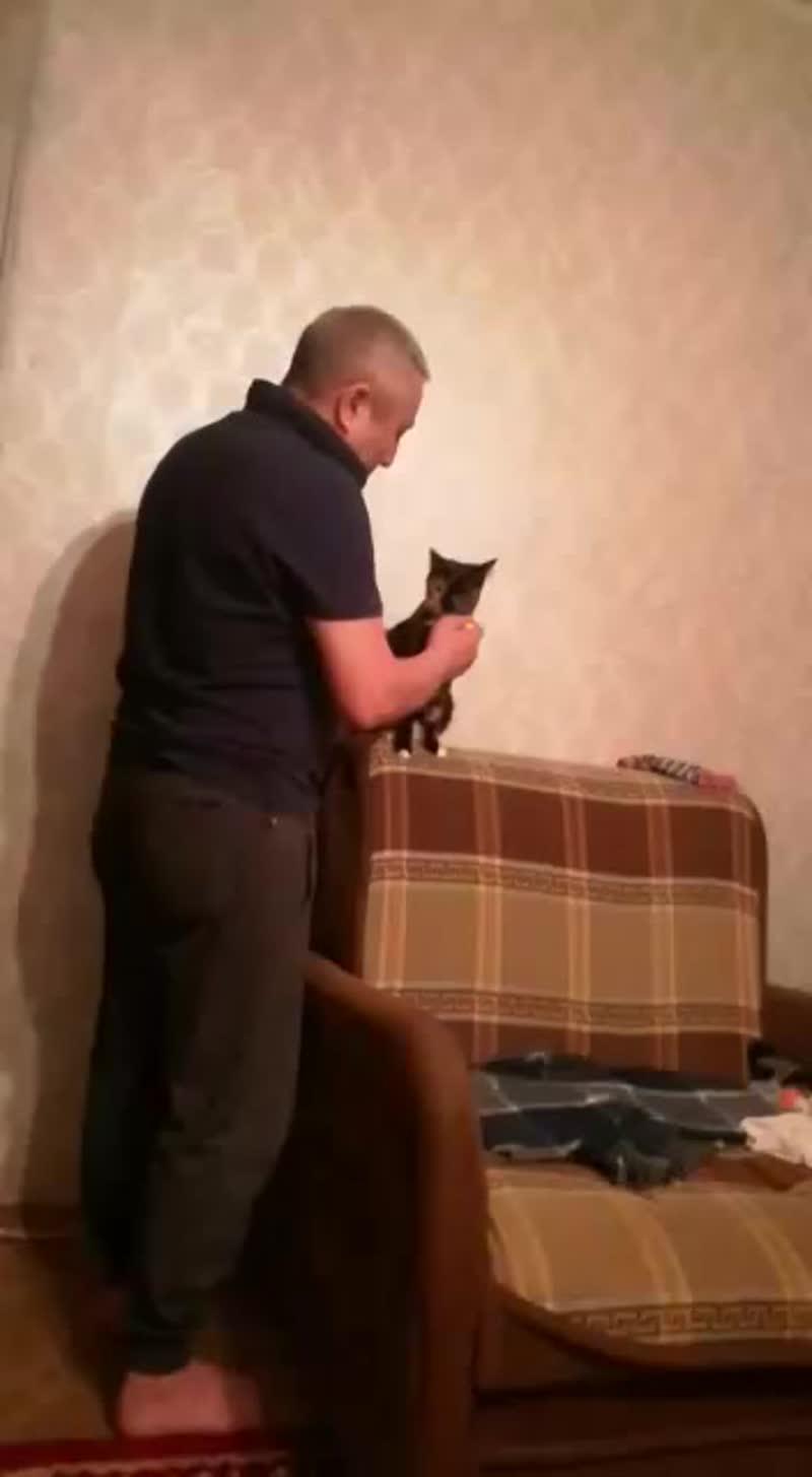 моя кошка  Жесика