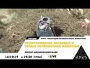 Лекция Общая характеристика хордовых и позвоночных животных, лектор Шариков Александр Викторович