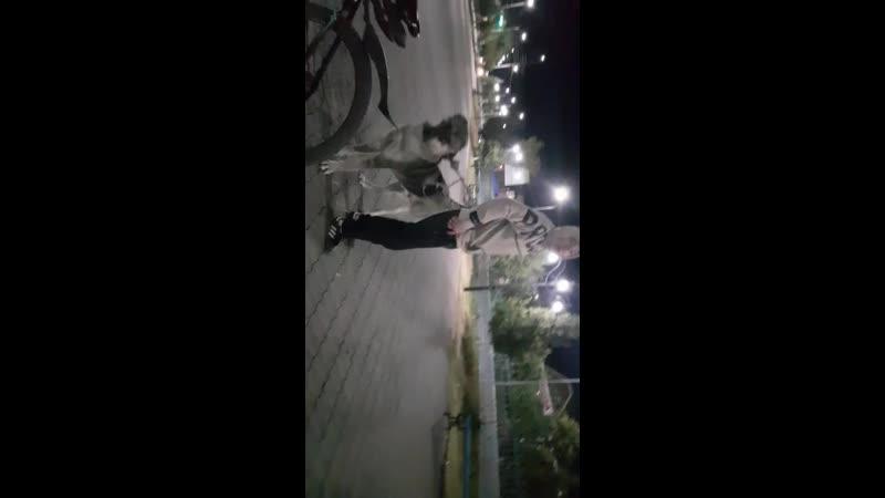Көксерек 1 жас Шарап х Сырттан иесі Ерқанат Шымкент