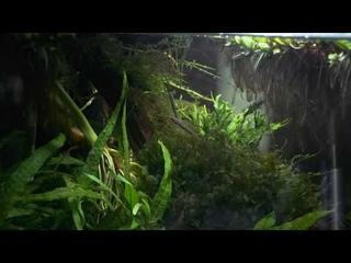 Аквариум с бычками и расборами | Aquarium with Stiphodon atropurpureus and rasbora heteromorpha