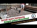 Ternak ayam kampung dengan pakan fermentasi ampas kelapa dan ampas tahu