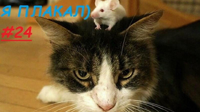 Я ПЛАКАЛ 24 Подборка приколов домашних животных Смешные коты приколы коты Cute Pets compilation
